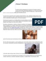 La Diferencia Entre Porno Y Erotismo