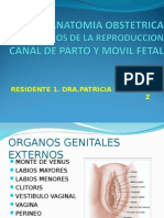 ANATOMIA OBST.ppt