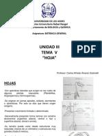 Tema v (Hoja) (Botánica General)