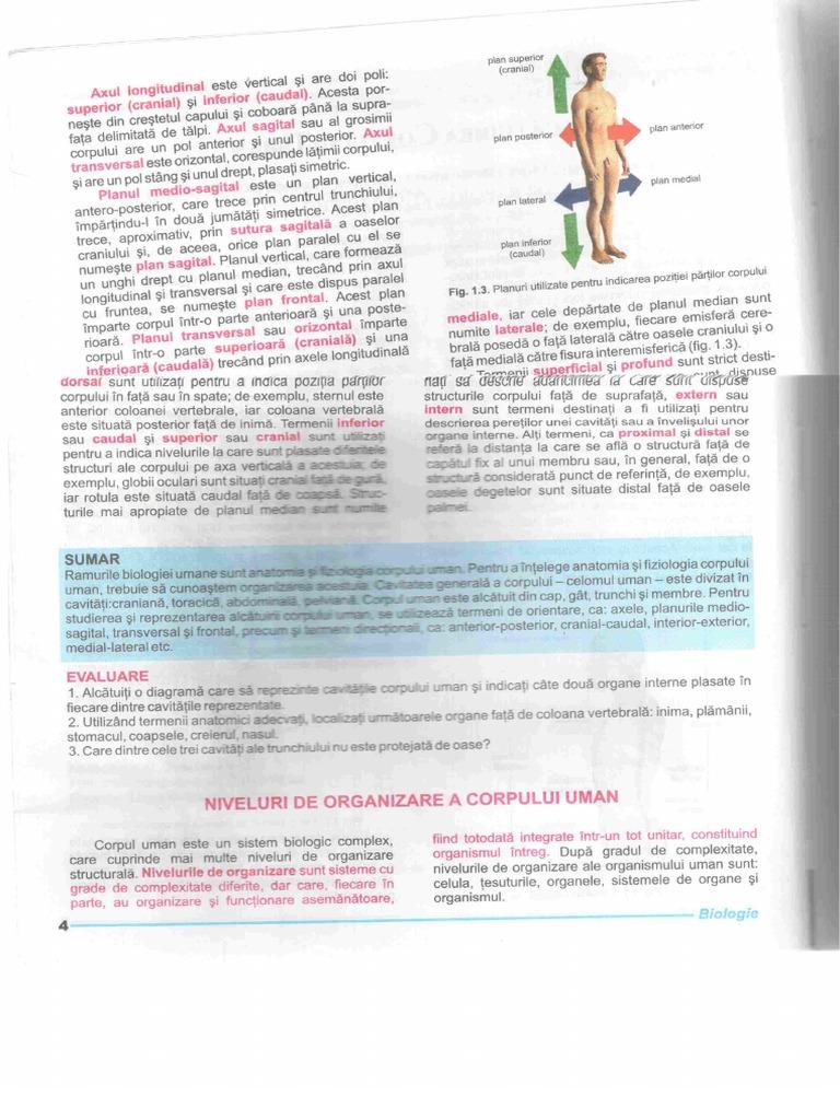 164331624 Anatomie Xi Hutanu SN Analizatoi