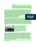 Utvrdjivanje gravidnosti ovaca.pdf