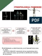 antropologia forensea