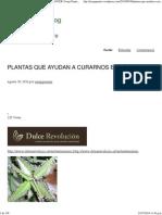 Plantas Que Ayudan a Curar El Cáncer _ Josep Pamies Blog