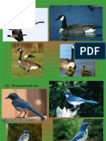bird id ppt 21 30 only