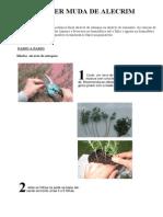 alecrin.pdf