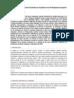 Regulación de Las Uniones Estrechas en El Epitelio de La Vía Respiratoria Superior (Traducida)