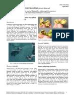 EJ_10-1.pdf
