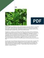 mrp Tea Industry in India.docx