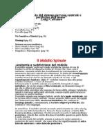 Neuroanatomia - Riassunto Del Cattaneo