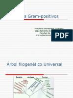 Cocos Gram Positivos-Definitivos