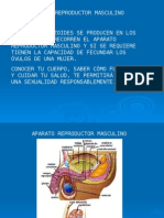 SISTEMA REPRODUCTOR.ppt