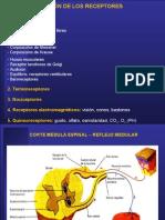 Medicina - Fisiologia. Reflejos Medulares