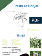 Insect Pests of Brinjal-By Nanadana Nayana Kumara