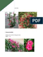 Biljke Za Hidroponski Nameštaj