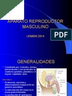 A.genital Masc. Ver. 2014