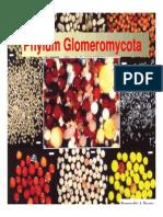 Phylum glomeromycota
