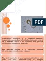 estrongiloidiasis-090621105224-phpapp02-140902230335-phpapp02