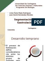 gastrulacion