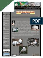 MG Bt.pdf