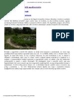 Lassan kezdődhet a téli madáretetés - Brannagh praktikái.pdf