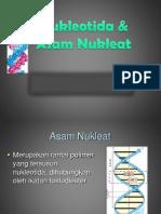 Asam nukleat.pdf