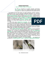 Mantodea y Odonata