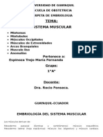Embriologia Sistema Muscular
