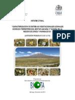 Caracterización de Sistemas Vegetacionales Azonales Hídricos Terrestres Del Sector Ancara y Tacora en La Región de Arica y Parinacota