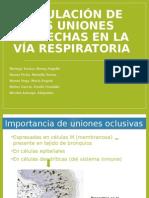 Uniones Estrechas en Vía Respiratoria