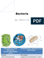 3 2 bacteria (1)