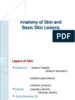 Anatomy of Skin