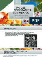 Raices Etnobotanicas de Mexico