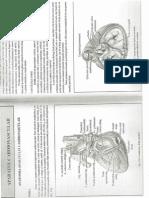 Anatomia Si Fiziologia AP. Cardiovascular