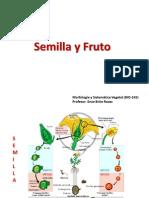 Fruto, Semilla