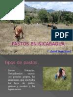 Pastos en Nicaragua.