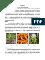 (Curcuma Longa, Zingiberaceae)