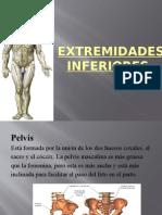 Anatomia de Extremidades Inferiores