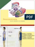 Neuroanatomía Básica