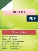 ANDREAEA