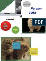 natalia's expert book pdf