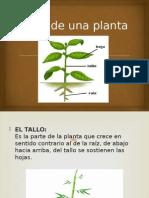 pt plantas 3°