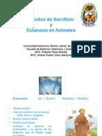 Métodos de muerte y eutanasia en animales.ppt