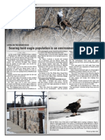 Soaring eagle population is an environmental success story