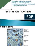 LP8.Tesut cartilaginos