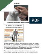 El Ronroneo de Los Gatos, Beneficioso Para Nuestra Salud