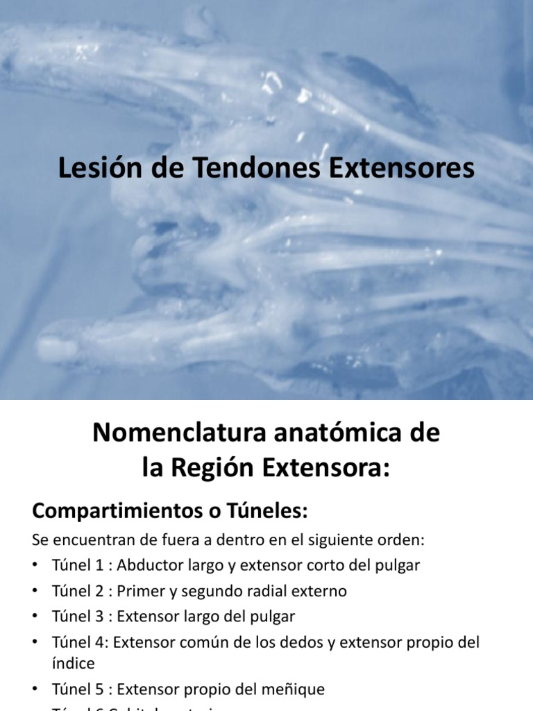 Lesión Tendones Extensores