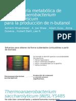 La ingeniería metabólica de Thermoanaerobacterium saccharolyticum corregido