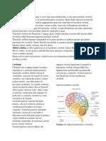 creierul.docx