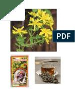 plantas medicinales, Hierba San Juan