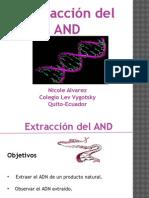 Experimento Extraccionadn Final Nicole Alvarez 101031165121 Phpapp01